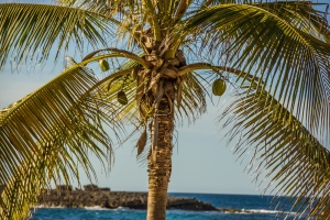 Palm tree in Puerto Rico